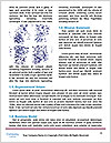 0000084055 Word Templates - Page 4