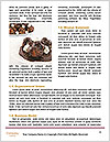 0000084057 Word Templates - Page 4