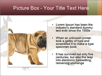 0000084062 PowerPoint Template - Slide 13