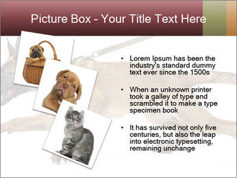 0000084062 PowerPoint Template - Slide 17