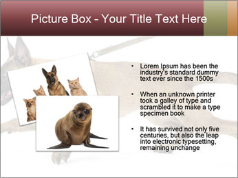 0000084062 PowerPoint Template - Slide 20
