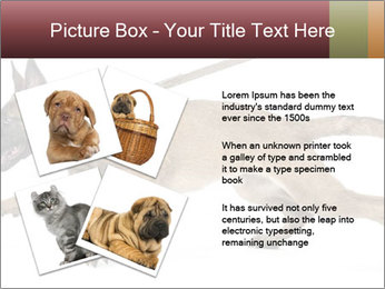 0000084062 PowerPoint Template - Slide 23