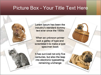 0000084062 PowerPoint Template - Slide 24