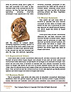 0000084062 Word Template - Page 4