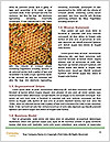 0000084069 Word Templates - Page 4