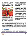 0000084092 Word Template - Page 4