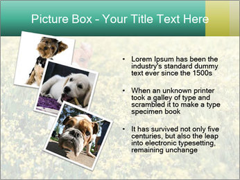 0000084119 PowerPoint Template - Slide 17