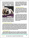 0000084119 Word Templates - Page 4