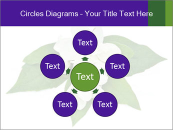 0000084147 PowerPoint Templates - Slide 78