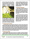 0000084161 Word Template - Page 4