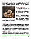 0000084173 Word Template - Page 4