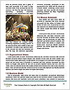 0000084177 Word Templates - Page 4