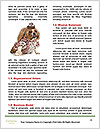 0000084186 Word Template - Page 4