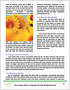 0000084203 Word Template - Page 4