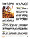 0000084214 Word Template - Page 4