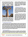 0000084232 Word Templates - Page 4
