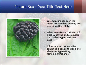 0000084234 PowerPoint Template - Slide 13