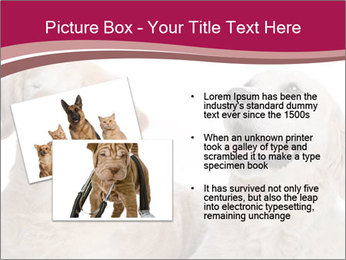 0000084253 PowerPoint Template - Slide 20