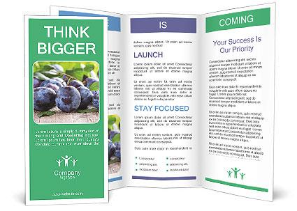0000084348 Brochure Template