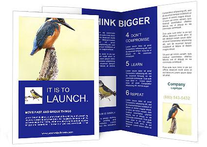 0000084360 Brochure Template