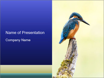 0000084360 PowerPoint Template - Slide 1