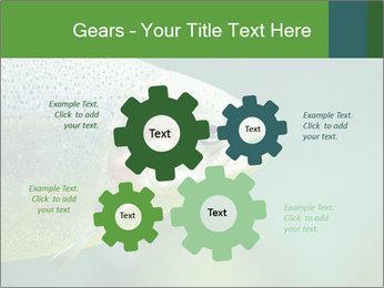 0000084361 PowerPoint Template - Slide 47