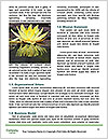 0000084361 Word Template - Page 4