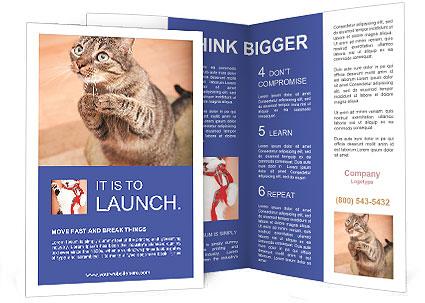 0000084386 Brochure Template