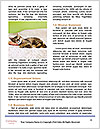 0000084386 Word Template - Page 4
