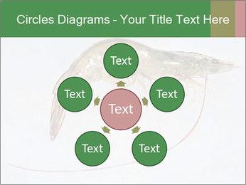 0000084393 PowerPoint Template - Slide 78