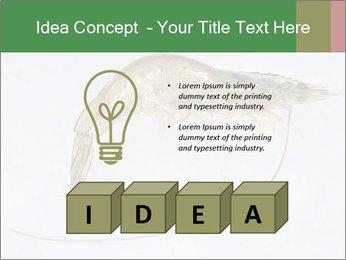 0000084393 PowerPoint Template - Slide 80