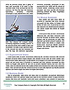 0000084426 Word Template - Page 4