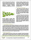 0000084466 Word Templates - Page 4
