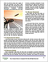 0000084471 Word Template - Page 4