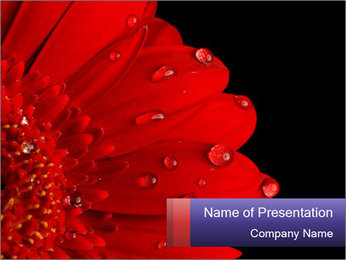 0000084488 PowerPoint Template
