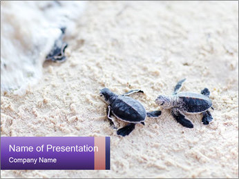 0000084489 PowerPoint Template - Slide 1