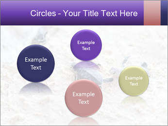 0000084489 PowerPoint Template - Slide 77