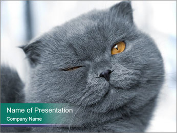 0000084532 PowerPoint Template - Slide 1