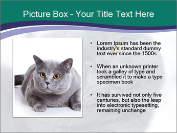 0000084532 PowerPoint Template - Slide 13