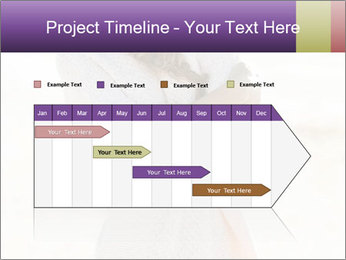 0000084560 PowerPoint Templates - Slide 25