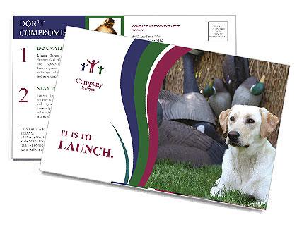 0000084566 Postcard Templates