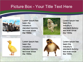 0000084566 PowerPoint Templates - Slide 14