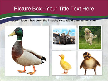 0000084566 PowerPoint Templates - Slide 19