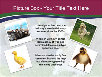 0000084566 PowerPoint Templates - Slide 24