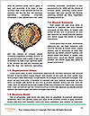 0000084607 Word Templates - Page 4