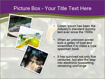 0000084665 PowerPoint Templates - Slide 17