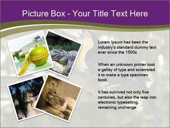 0000084665 PowerPoint Templates - Slide 23