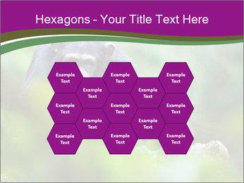 0000084666 PowerPoint Template - Slide 44