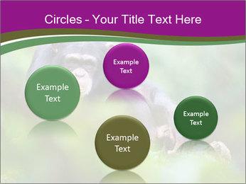 0000084666 PowerPoint Template - Slide 77