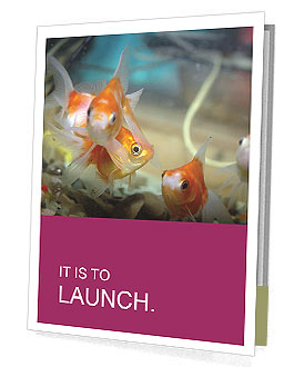 0000084701 Presentation Folder